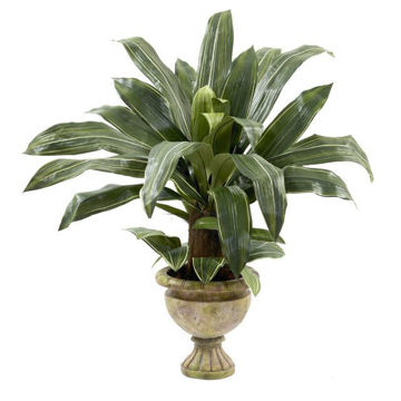 "Picture of 40"" Dracaena Plant With Urn"