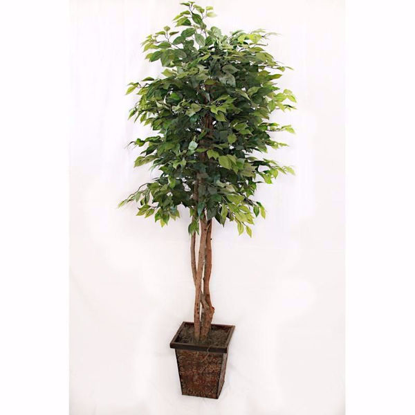 Picture of 6.5 Foot Green Ficus Tree