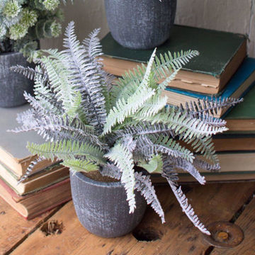 Picture of Fern Succulent with Round Grey Pot