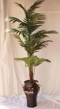 Picture of Botanical Palm