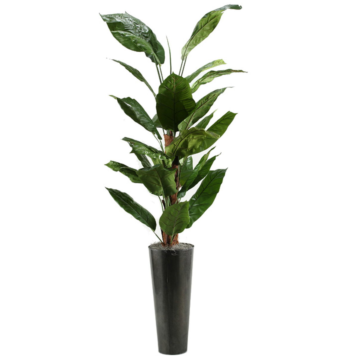 Picture of 7' SPATH TREE IN A METAL PLANTER